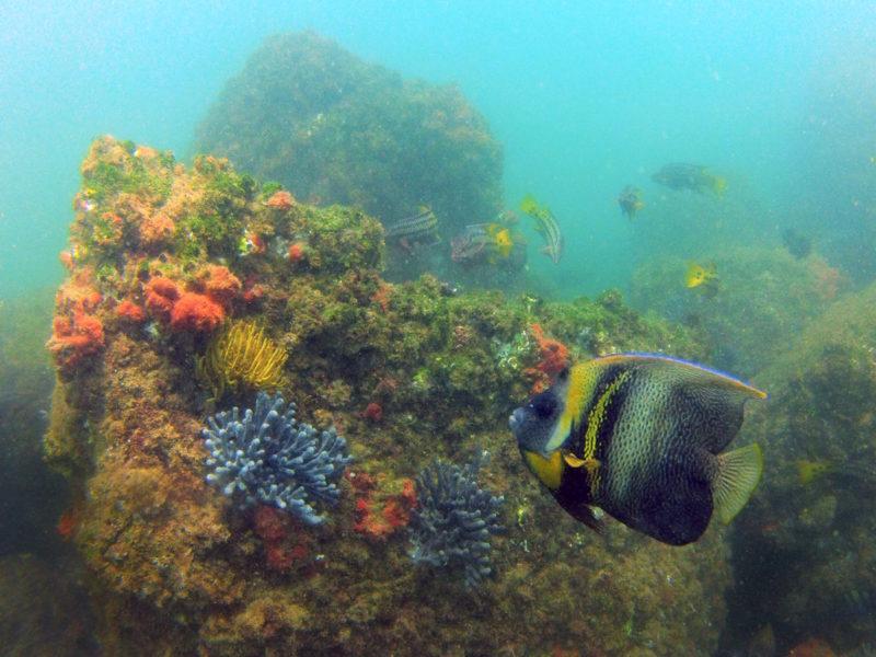 Imagen tomada en los Arrecifes de Punta Sal, una de las áreas que sería preservada con la Zona Reservada del Mar Pacífico Tropical. Foto de Yuri Hooker.