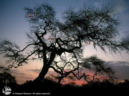 Bosque semidesértico en la ACP Chaparrí. Fotografía de www.chaparri.org