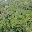 La selva amazónica en la cuenca del Putumayo en Loreto, Perú, fue examinada durante un breve inventario en febrero del 2016 por el Field Museum. Foto por Nigel Pitman / The Field Museum.