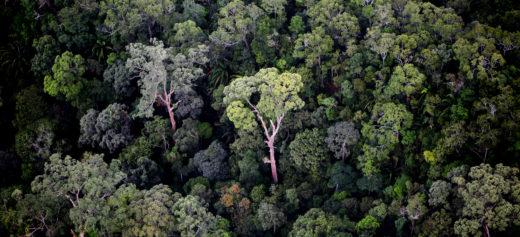 Selva tropical de Borneo. Foto de Rhett Butler.
