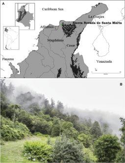 Ubicación geográfica de la nueva especie de tarántula Kankuamo marquezi. Gráfico de Perafán, Galvis, Gutiérrez, Perez-Miles.