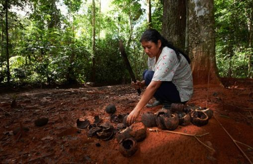 Mujer observando frutos de castaña. (Fotografía de Thomas Muller)
