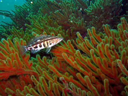La propuesta para establecer la Zona Reservada Mar Pacífico Tropical contempla 4 áreas claves para la conservación marina. . Foto de Yuri Hooker