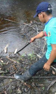 Un poblador observa los peces muertos en la comunidad de Cuninico. Testimonios afirman que son producto del derrame en Nueva Alianza. Fotografia de Manolo Barjón.
