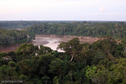 La contaminación se produce incluso en la zona de amortiguamiento de la Reserva Nacional de Tambopata. Fotografía de Rhett Butler/Mongabay