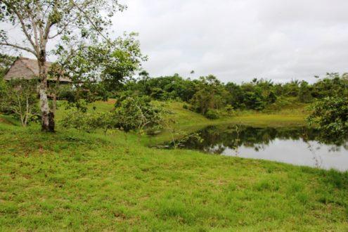 Imagen panorámica del 'Fundo Rosita'. Fotografía de Actualidad Ambiental.