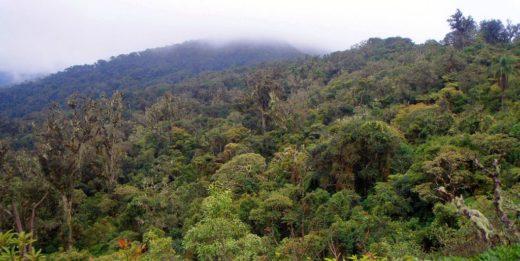 Vista panorámica del Parque Amboró. Foto de Ángel M. Felicísimo en Flickr bajo licencia Creative Commons.