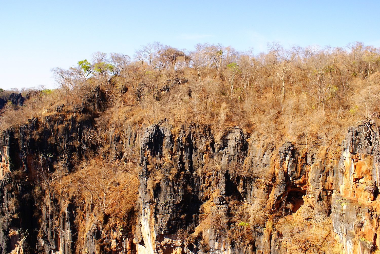Bosques secos en Minas Gerais, Brasil. Foto: Flavia Pezzini.