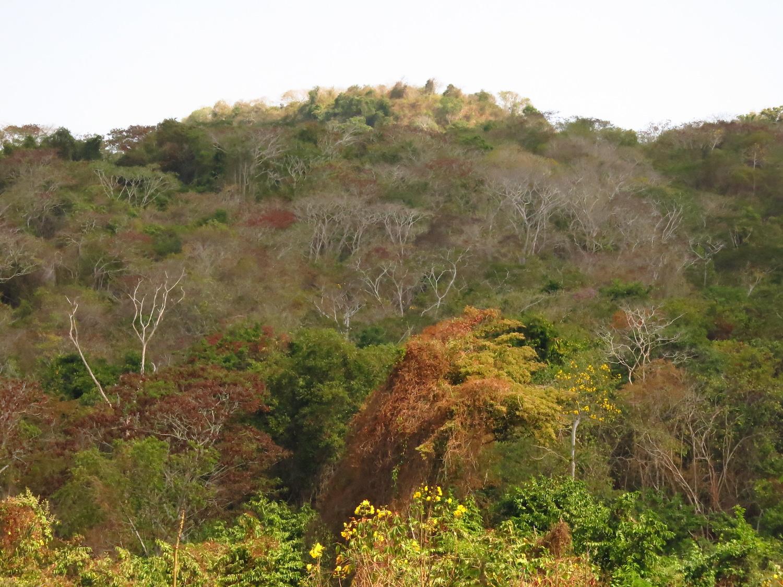 Bosques secos situados en el municipio de Piojó en Atlántico, Colombia. Foto: Karina Banda.