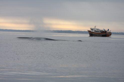 En Chile existen zonas prioritarias para la conservación. Punta de Choros es una de ellas, donde habitan ballenas, delfines, pingüinos, además de ser un área de desove y reproducción de un gran número de especies. Foto de WWF Chile.