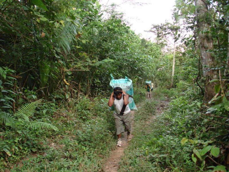 No existe otro producto que tenga la importancia económica que tiene la castaña en el norte amazónico de Bolivia. Foto: Eulogio Suxo.