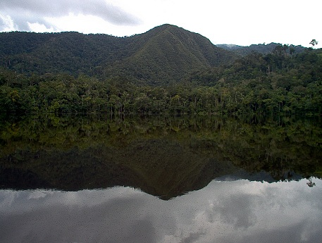 Bosque de Protección Alto Mayo. Fotografía de Sernanp.