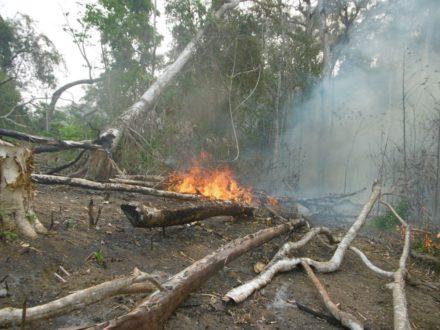 Foto de la Municipalidad distrital de Río Tambo