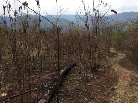 Rastros del incendio que afectó a la comunidad de Potsoteni hace dos semanas. Foto de María Isabel Torres