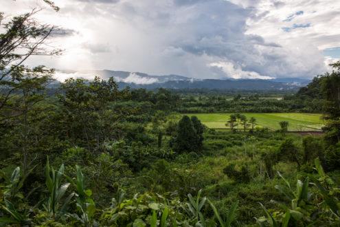 Los cultivos de arroz reemplazan ahora los bosques en la región San Martín. Foto: Archivo Mongabay Latam.