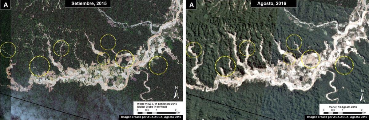 Evolución de la deforestación en el Parque Bahuaja Sonene en setiembre del 2016. Imagen: MAAP. Datos: Planet, Digital Globe (Nextview)