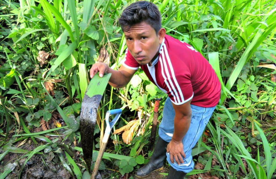 Hoja con petróleo sostenida por el apu de Nuevo Andoas, Teddy Guerra Magin. Fotografía de Milton López.