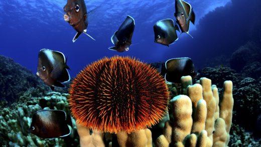 Un área protegida como un parque marino puede ayudar como herramienta de conservación para especies únicas en esos ecosistemas. Crédito de la imagen: The Pew Charitable Trusts