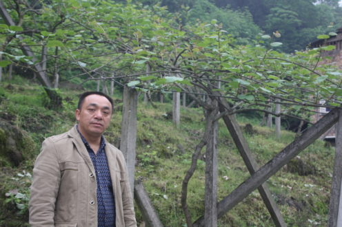 Zou Huagang, jefe del pueblo Lianhe, posa delante de una granja de kiwi local. La familia de Zou posee aproximadamente tres acres de tierras de cultivo de kiwi.
