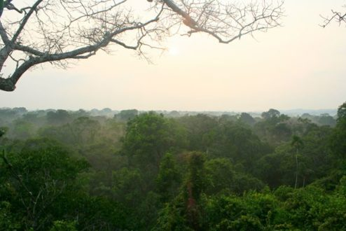 Parque Nacional Yasuní. Foto de Jeremy Hance.