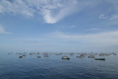 La Zona Reservada Mar Pacífico Tropical permitiría un manejo sostenible de los recursos marinos. Foto de Otto Alegre / SPDA