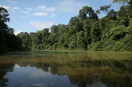 El Parque Nacional del Manu ha sido el hogar de Luis Huanca durante 33 años de su vida. Foto: Sernanp.