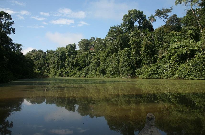 Extensa vegetación en el Parque Nacional del Manu. Foto: Sernanp.