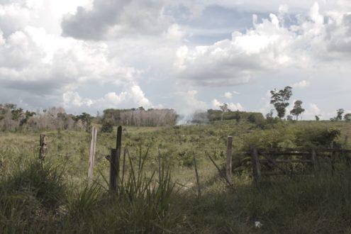 """Después de los incendios en la Reserva de la Biósfera Maya, una de las prácticas de los llamados """"narcoganaderos"""" es cerrar el área quemada con cercos para, a continuación, introducir ganado. Foto de Joaquín Ruano."""