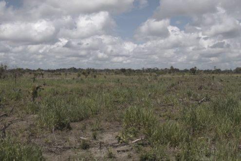 """Un incendio provocado el 10 de abril de 2016 hizo que ardieran 3704 hectáreas de bosque característico de humedal dentro del Parque Nacional de la Laguna del Tigre. Está compuesto por un tipo de bambú llamado coloquialmente """"jimba"""", que con las altas temperaturas de la época de verano se convierte en un combustible para el fuego. Foto de Joaquín Ruano."""
