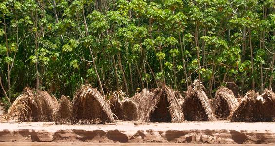 Viviendas de población en aislamiento en el Parque Nacional Alto Purús. Fotografía: Inforegion.