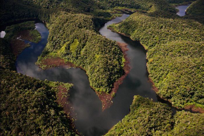 Imagen panorámica del Parque Nacional Alto Purús. Fotografía: Thomas Muller/ SPDA.