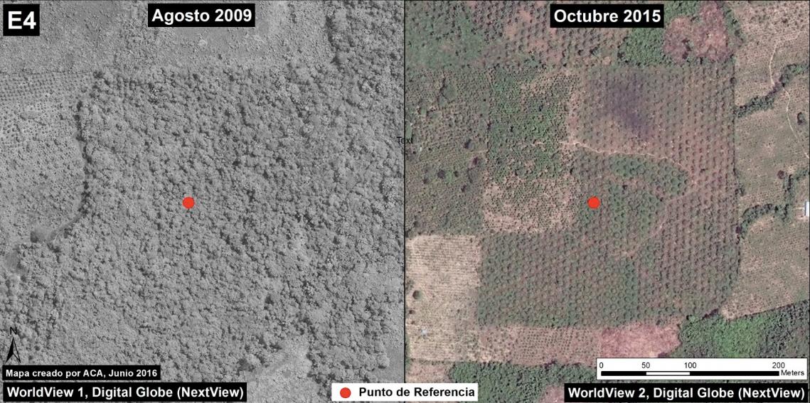 Cultivos de palma captados con imágenes satélitales. Imagen: MAAP/Digital Globe (Nextview)(