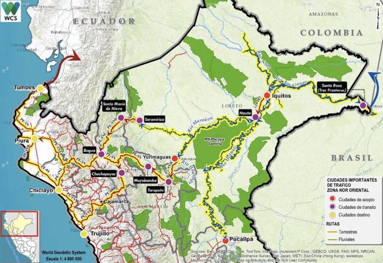 Zona nor oriental de tráficos de especies. Mapa: WCS/Serfor.