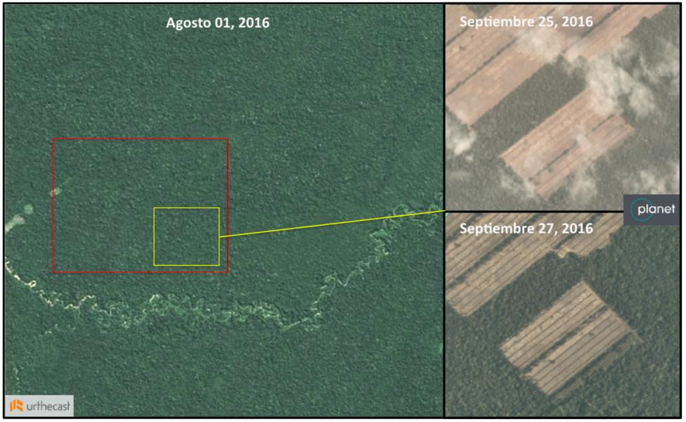 El avance de una nueva plantación de caña de azúcar que se inició a mediados de agosto y que progresa rápidamente. Producido por Mongabay y las imágenes son cortesía de 2016 Planet Labs Inc. bajo licencia CC BY-SA 4.0.
