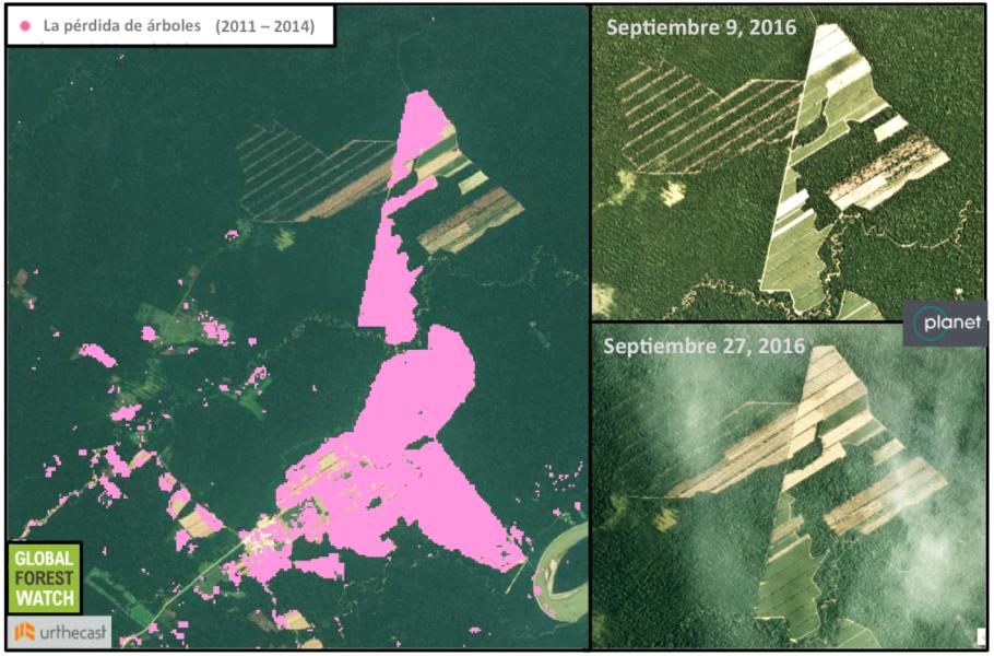 Global Forest Watch muestra que alrededor de 1.300 hectáreas (13 kilómetros cuadrados) fueron despejadas alrededor de una planta de procesamiento de caña de azúcar entre 2011 y 2014. Alrededor de 600 hectáreas más se han visto afectadas desde entonces, con una aceleración de la actividad el mes pasado. Producido por Mongabay y las imágenes son cortesía de 2016 Planet Labs Inc. bajo licencia CC BY-SA 4.0.