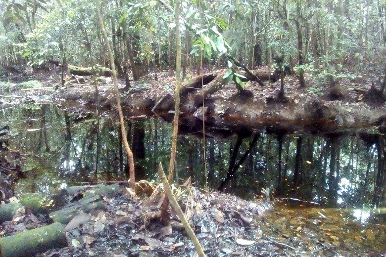Contaminación de las otras 22 comunidades en el distrito de Morona. Fotografía de Juan Duber Jaime Segura.