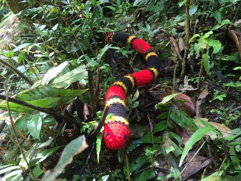 Los pobladores tejen algunas de las especies con las que conviven, pero lo hacen con la ayuda de los científicos para respetar los colores, tamaños, la taxonomía. Foto: María Cristina Gallegos.