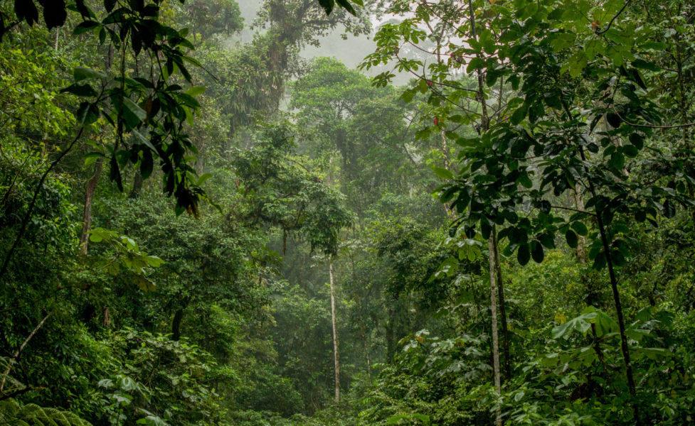 Ikiam está ubicada en el corazón de la Amazonía ecuatoriana, a unos pocos kilómetros de la Reserva Biológica Colonso Chalupas. Foto: Martín Bustamante.