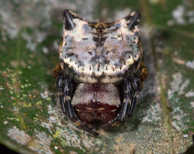 Existe mucho por descubrir dentro de la reserva biológica Colonso Chalupas y las 20 estaciones científicas buscan conocer la Amazonía ecuatoriana. Foto: Graham Wise.