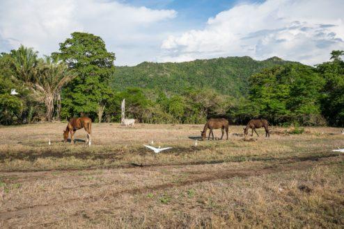 Deforestación en el Tolima. Foto de Felipe Villegas V. Instituto Humboldt.