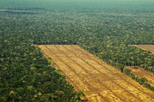 Imagen aérea de una parte de la plantación de caña de azúcar EASBA. Foto de Eduardo Franco Berton