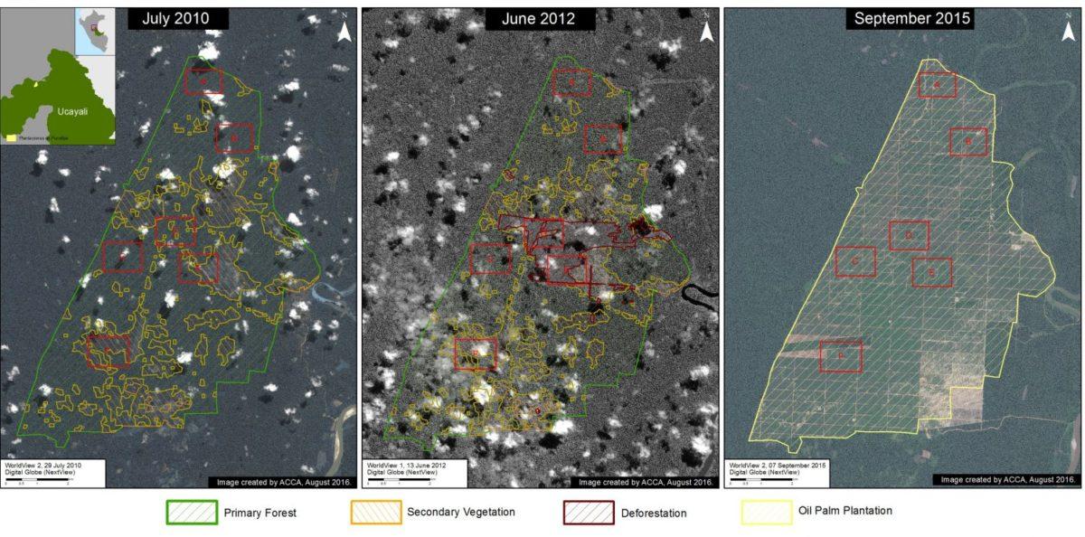 Imágenes satelitales de MAAP que demuestran la deforestación de bosque tropical en Ucayali por Plantaciones de Pucallpa. Gráfico: MAAP.