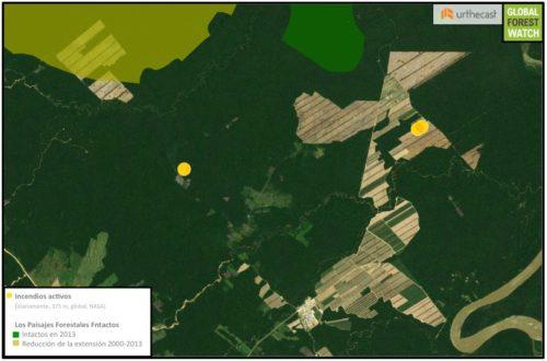 Dos de estas nuevas áreas de tala se acercan a un Paisaje Forestal Intacto (IFL), que hasta el año 2013 no se había perturbado. IFL son extensiones de bosque primario que están particularmente conectadas y no perturbadas. Datos de la NASA muestran tres incendios ocurridos la semana pasada (11/9 a 11/16), lo que indica que la plantación ha tenido actividad de tala.