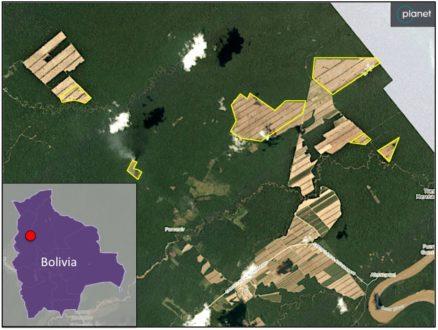 Las imágenes de Planet Labs obtenidas el 5 de noviembre muestran varias nuevas áreas de bosque deforestado (contorneado en amarillo) que totalizan alrededor de 700 hectáreas desde finales de septiembre.