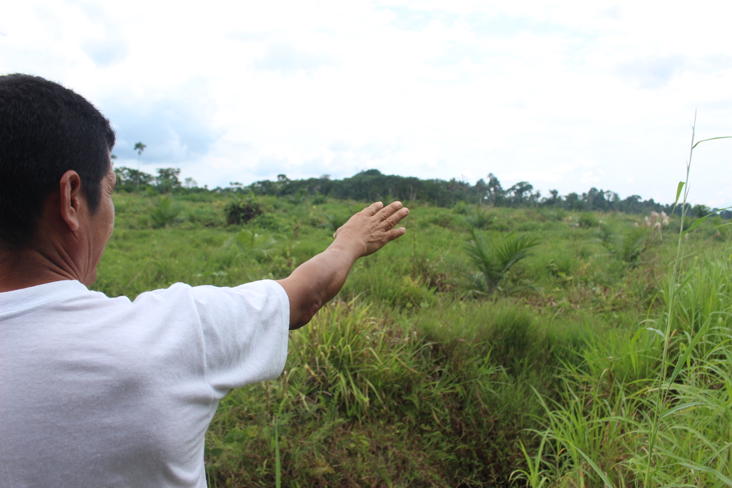 President of the Riveras del Punino community, Maximiliano Moreno, shows terrain adjoining his farm that used to be forest and now is planted with palm. Photo by Daniela Aguila