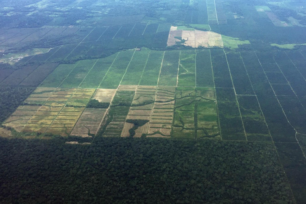 Aerial images of deforestation that begin to appear around large, established plantations. Photo by Mongabay-Latam