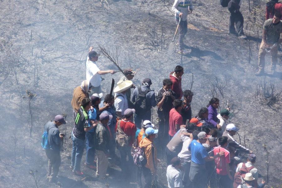 Alrededo de 2 000 hectáreas de la zona de amortiguamiento del parque han sido afectadas. Foto: Municipalidad de Cutervo.