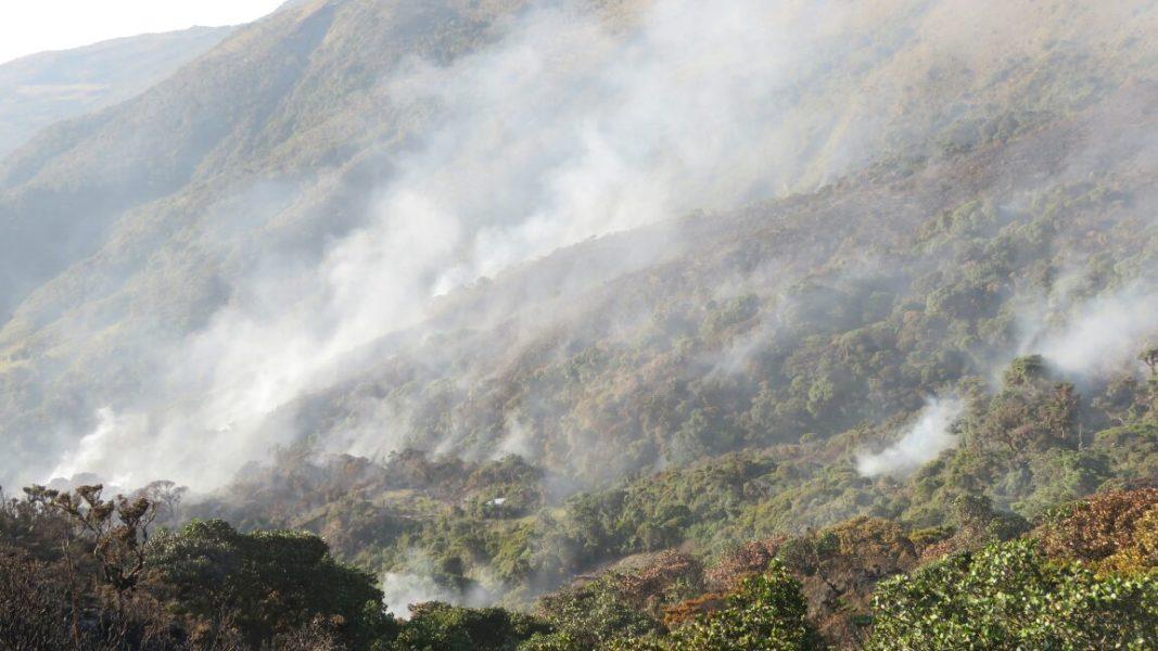 Imágenes recientes registradas en el área de conservación ambiental Cachiaco-San Pablo. Foto: Alex More.