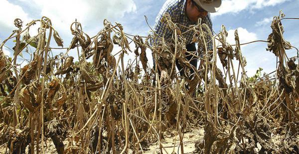 Son más de 132 000 campesinos los afectados por la sequía, según reporte del Gobierno boliviano. Foto: Diario El Deber de Bolivia.
