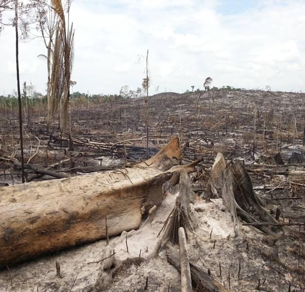 En el 2015 se derribaron 23 812 hectáreas de bosques para abrirle paso a la ganadería y a los cultivos ilícitos, según el IDEAM. Foto: Cortesía de la Subdirección de Administración Ambiental, Corpoamazonia.